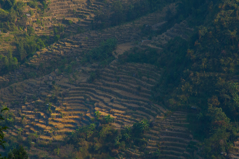 First Light On The Rice Fields - Kohima, North-Eastern India
