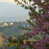 Spring Colors Above The Valleys Of Kohima - Kohima, North-Eastern India