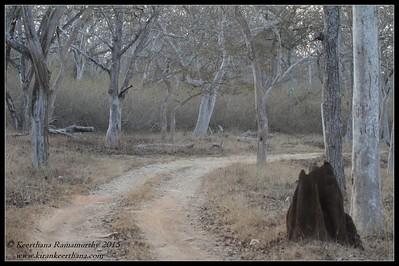 Bandipur Forest scape, safari path in the jungle, Bandipur, Karnataka, February 2015