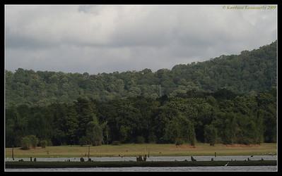 Kabini Forest scape, Kabini, Mysore, Karnataka, India, June 2009