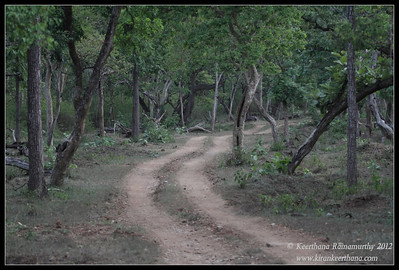 Bandipur Forest scape, safari path in the jungle, Bandipur, Karnataka, June 2012,