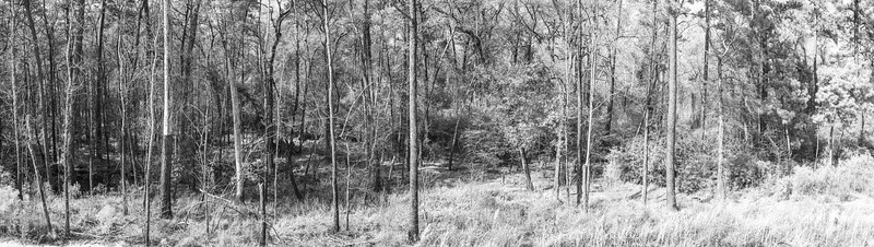 20210118-Spring Creek Trail-257-Pano
