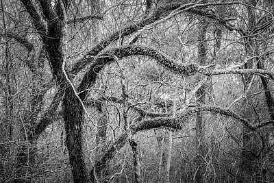 20210213-Spring Creek Trail-40-Edit
