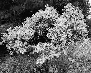 20201015-Spring Creeek Trail-85-Edit