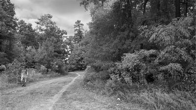 20201015-Spring Creeek Trail-71-Edit