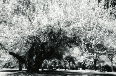 This photograph was hand-printed on Ilford fiber paper from infrared film in a traditional darkroom. Subsequently, it was selenium toned to enhance the tonal range and longevity of the print.