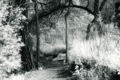 Strolling through the Houston Arboretum