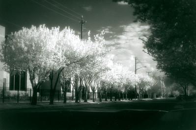Arlington Street in Bloom