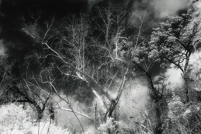 This photograph was hand-printed from infrared film in a traditional darkroom. Subsequently, it was selenium toned to enhance the tonal range and longevity of the print