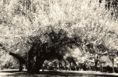 This photograph was hand-printed on Ilford fiber paper from infrared film in a traditional darkroom. Subsequently, it was selenium and sepia toned to enhance the tonal range and longevity of the print.