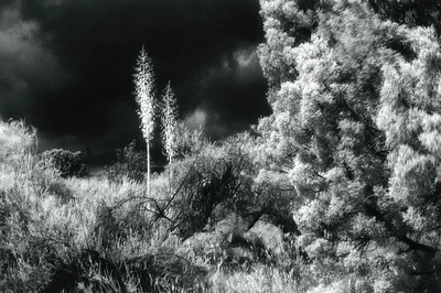 Foliage at Vasquez Rocks