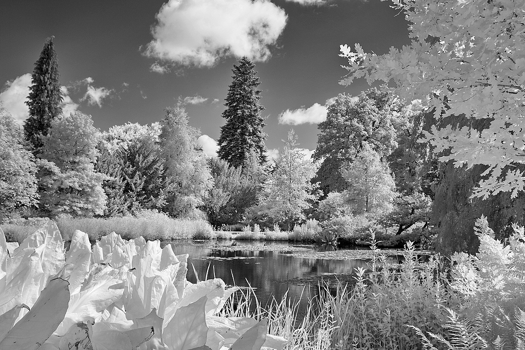 Longstock Water Gardens, Hampshire