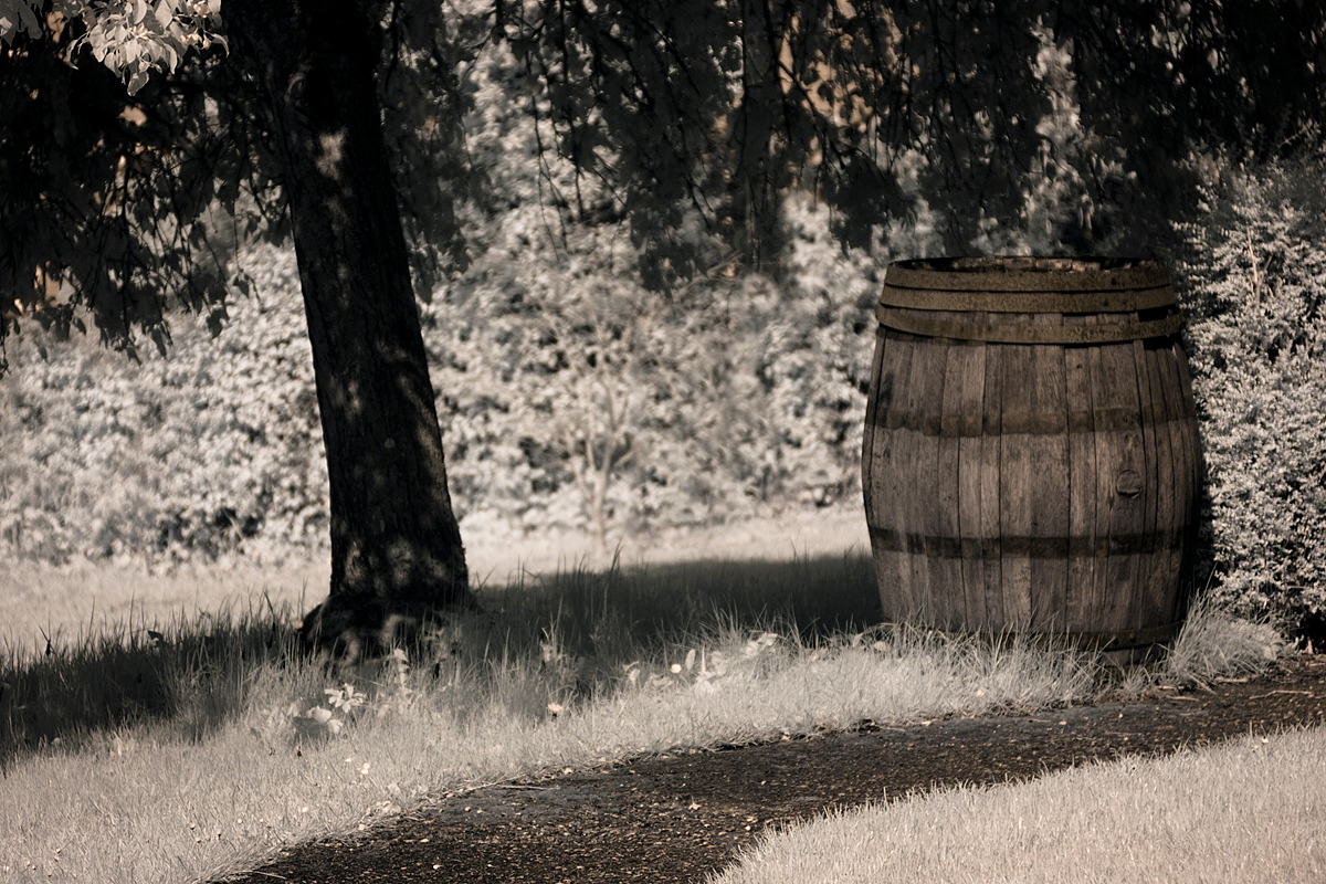 Spring Willow Barrel