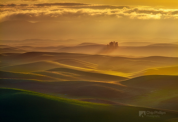 """""""Small Forest, Palouse Hills""""  Misty early morning light during spring in the Palouse, Washington State."""