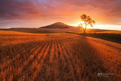 Golden Wheat Field Sunset