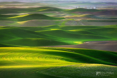 """Palouse Green""  The vibrant rolling hills or the Palouse seen in their spring green. Palouse Hills, eastern Washington State"