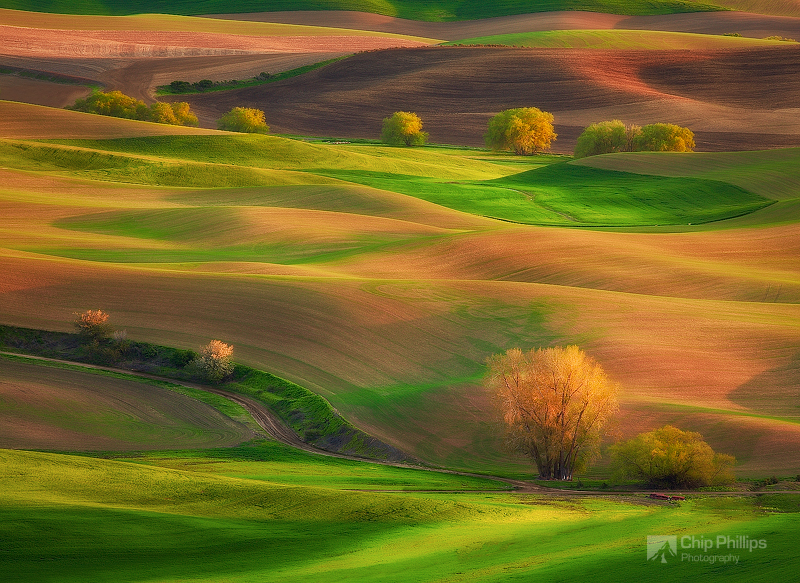 """""""Cottonwood Rows Palouse""""  Spring Cottonwoods seen from Steptoe Butte at sunset."""