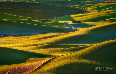 """Grain Silos and Tree, Palouse""  Morning light on the hills of the Palouse in Washington State, shot from Steptoe Butte in spring."