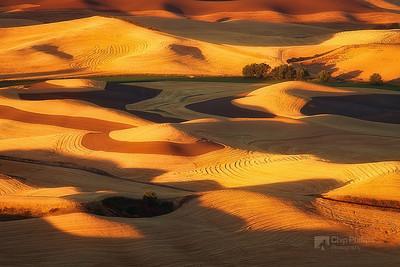 """Golden Swirls Palouse""  Golden light blankets the hills of the Palouse. Late summer harvest, Palouse, Washington State"