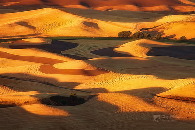"""Golden Swirls Palouse""  Golden light blankets the hills of the Palouse. Late summer harvest, Palouse, Washington State"