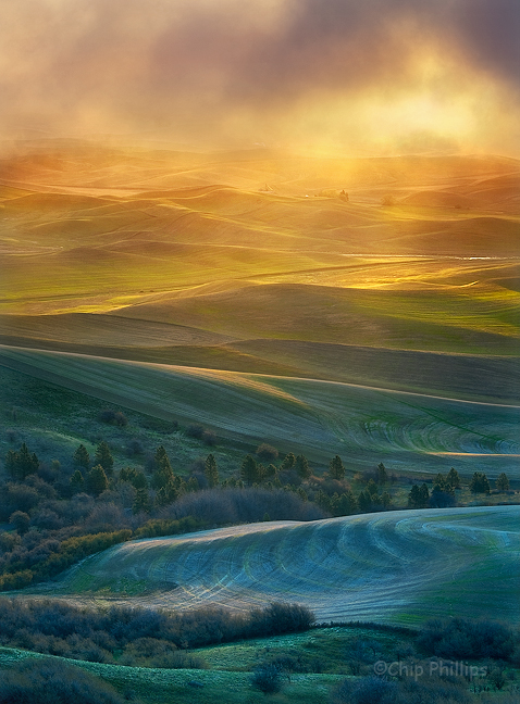 """Vertical Golden Light, Palouse""