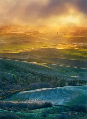 """Vertical Golden Light, Palouse""  Misty light at sunrise during spring in the Palouse."