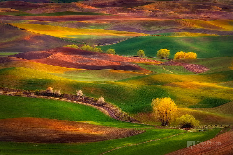"""""""Sunset Glow, Palouse""""  The multi-colored hills of the Palouse, seen during early spring at sunset. Shot from Steptoe Butte, Palouse, Washington State"""