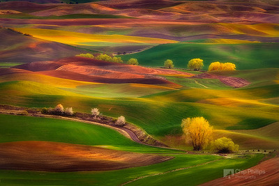 """Sunset Glow, Palouse""  The multi-colored hills of the Palouse, seen during early spring at sunset. Shot from Steptoe Butte, Palouse, Washington State"