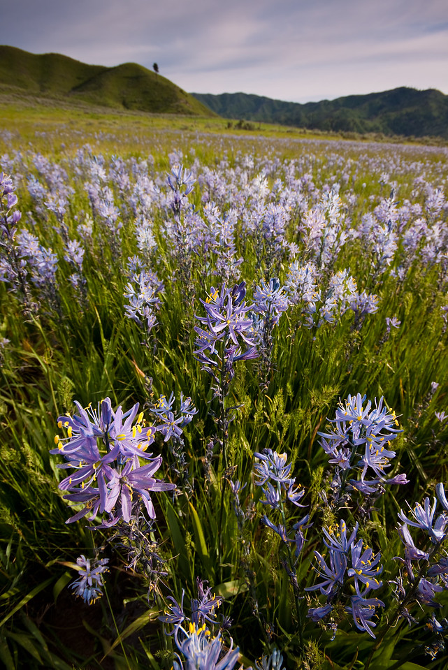 Flowers near the South Fork Boise River on a sunny spring afternoon.