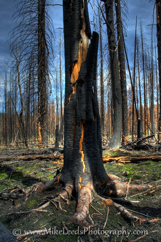 Burned Forest near the South Fork Salmon River and Warm Lake in Idaho.