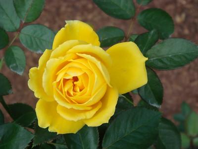 Inniswood Metro Garden - Flowers