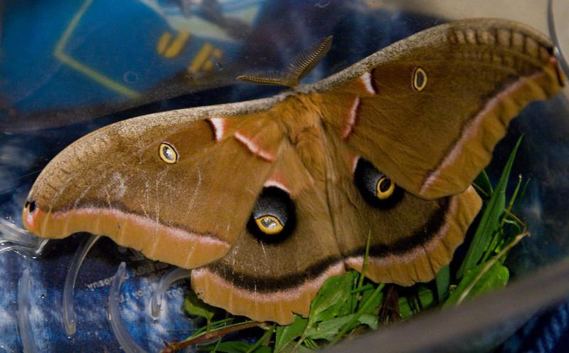 _MG_8780 big moth