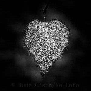 Kaldt hjerte