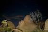 Night Tree2