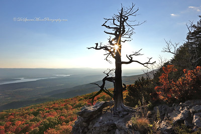 The dead tree at Mount Magazine Lodge, Arkansas, overlooking the valley below at sunset.