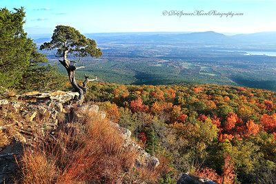Iconic Mount Magazine Tree