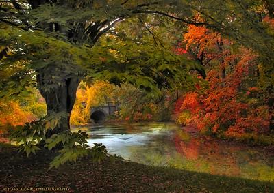 Intimate Autumn