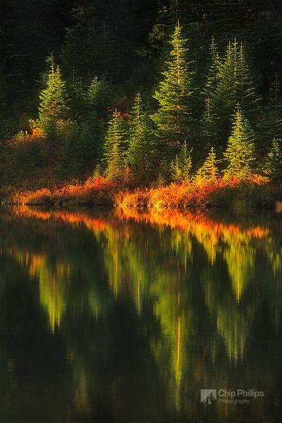 """Picture Lake Reflections, Mount Rainier""  Fall colors reflecting in Reflection Lake, Mount Rainier National Park."