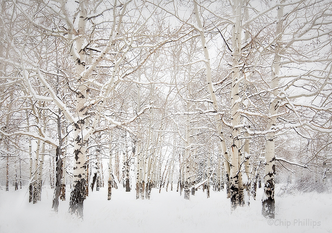 """""""Aspens in the Snow""""  After record snowfall, I shot these aspens covered in snow in Grand Teton National Park, Wyoming."""