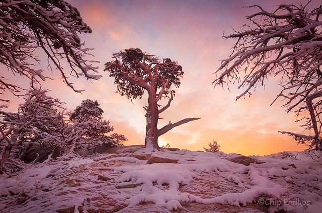 """Windblown Pine""  A windblown pine shot on an overnight winter trip into Glacier National Park."