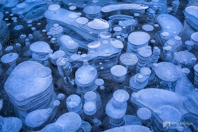 """Ice Bubble Abstract#1""  Ice bubbles seen through a frozen section of Alberta's Abraham Lake."