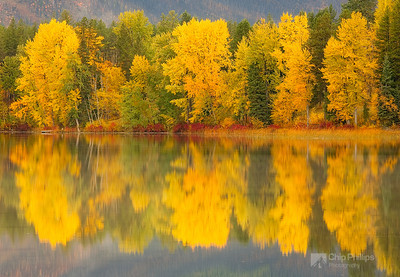 """Montana Fall""  Fall colors and reflections over a small pond just outside Glacier National Park."