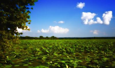 Amana Lily Lake  07 08 11  001 - Edit
