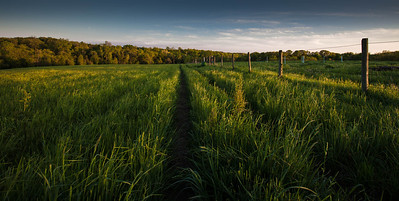 Coester Farm  05 18 11  002