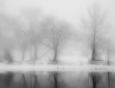 Winter Trees  02 20 10  047