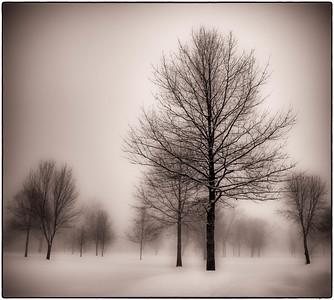 Winter Trees  02 20 10  023 - Edit-2