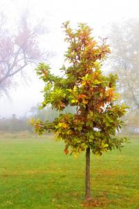 Fog  10 18 08  012 - Edit-2