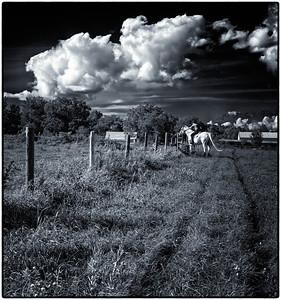 Farm Field  08 09 11  020-2