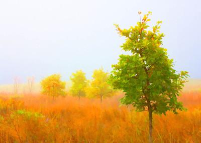 Fog  10 18 08  071 - Edit - Edit