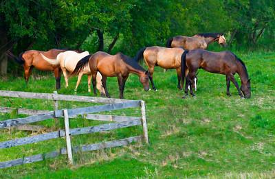 Horse Herd  08 23 11  003 - Edit